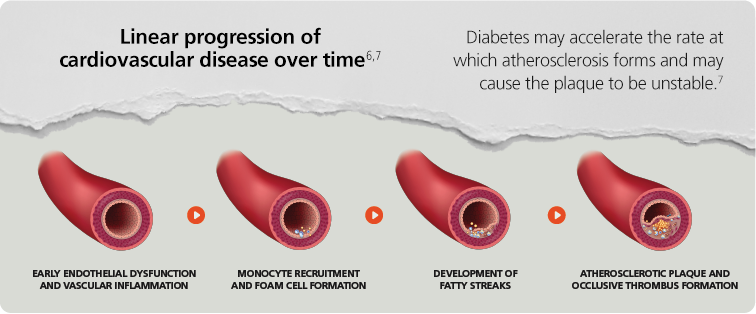 Diabetes Is A Disease That Greatly Impacts Cardiovascular Risk